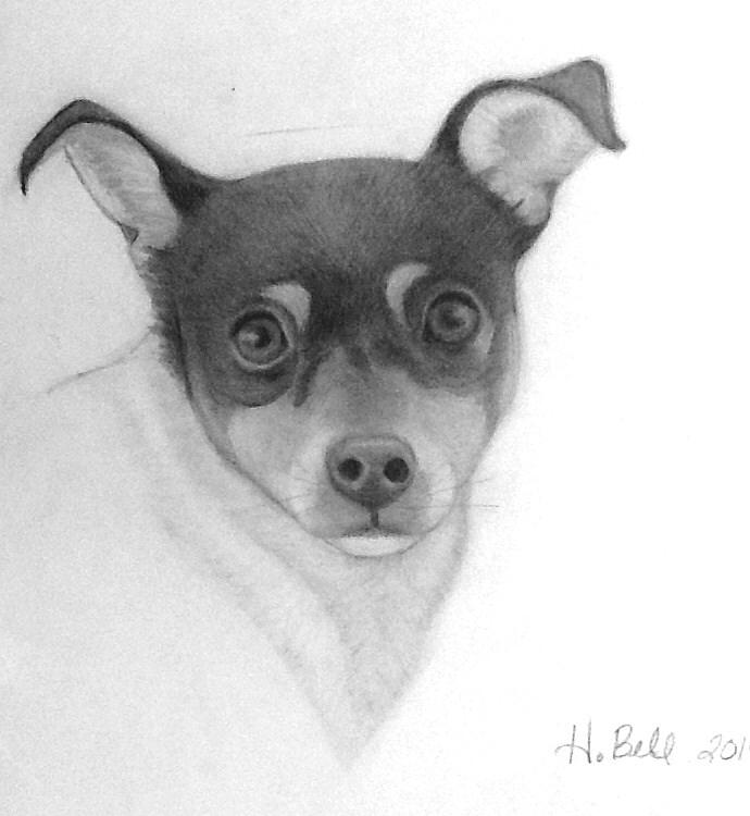 Dog Drawing - Tizzy by Holly Bell