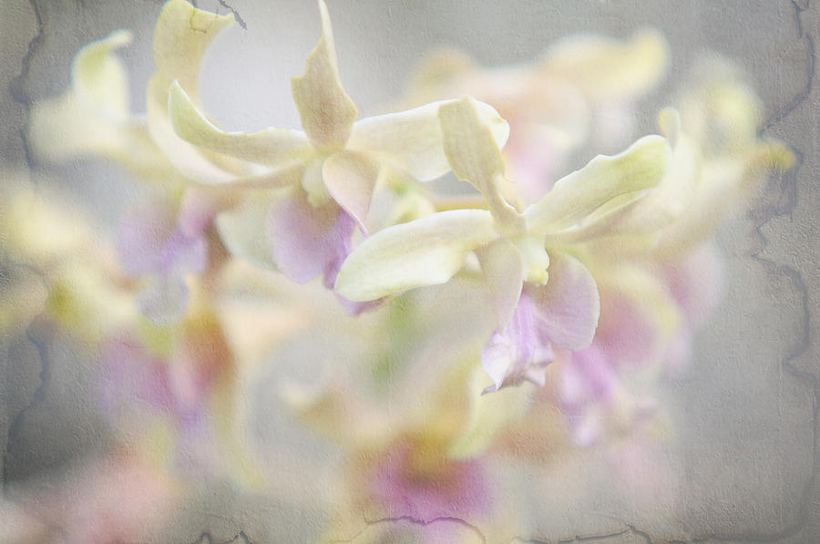 Orchid Photograph - To Dream A Dream by Jenny Rainbow
