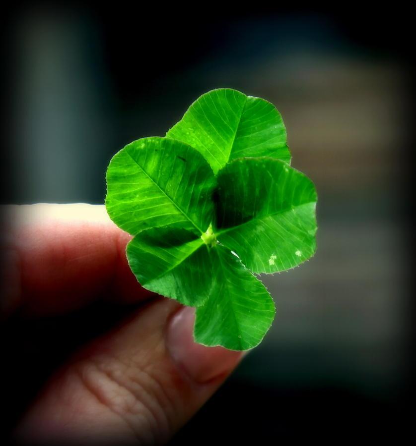 Irish Photograph - To Dream by Karen Wiles