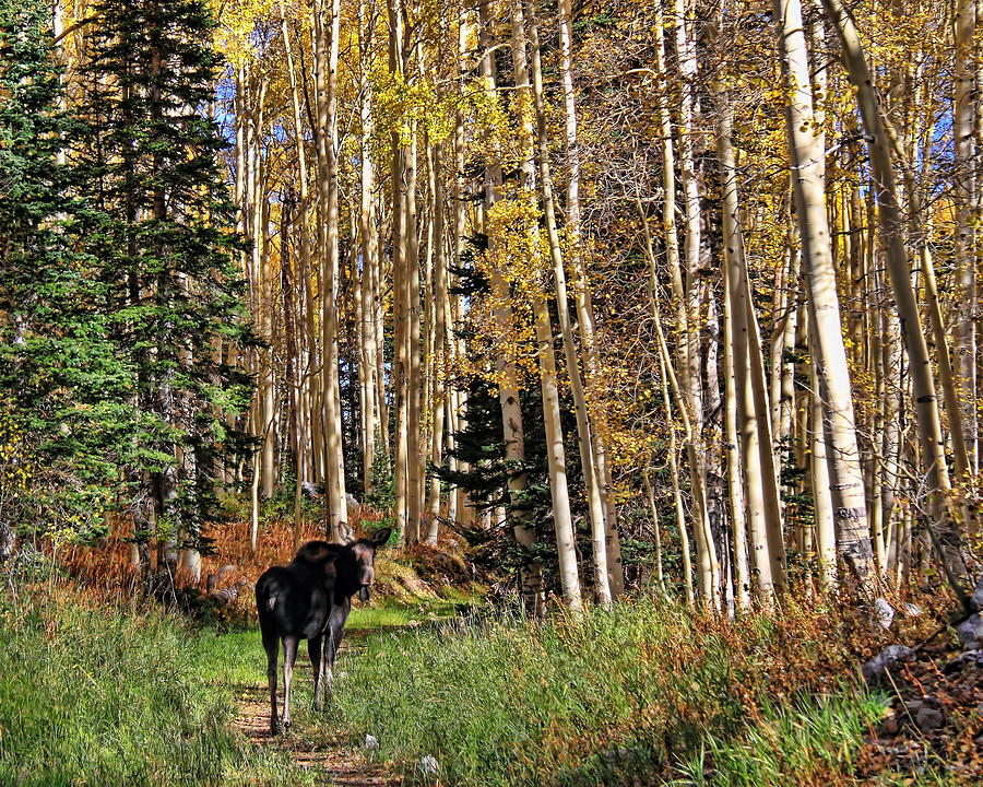 To Hike With A Moose by Gene Praag