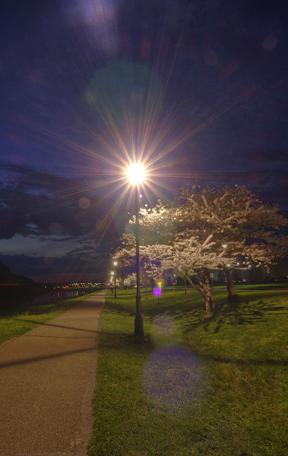 Path Photograph - To Light The Way by Shirley Tinkham