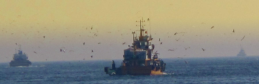 To The Fishing Grounds Photograph