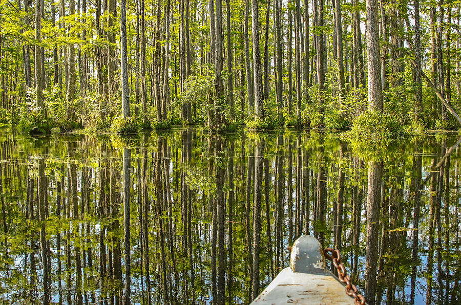 To the Swamp Photograph by Daniela Duncan