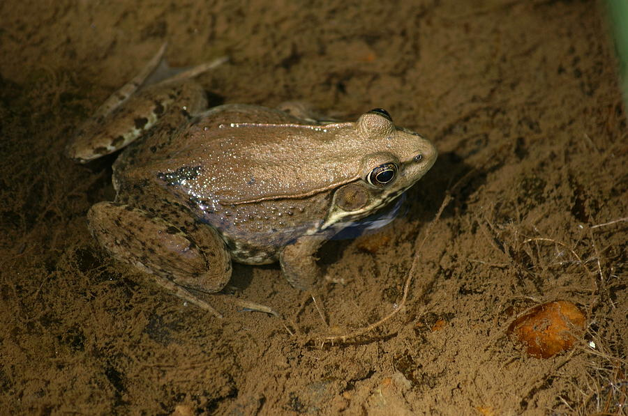 Water Photograph - Toad by Heidi Poulin