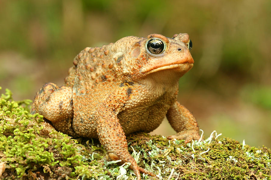 Toad Photograph - Toad by John Bell