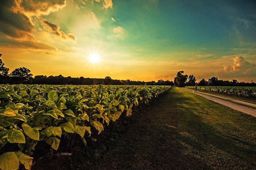 Tobacco Road Photograph by John Harding Photography