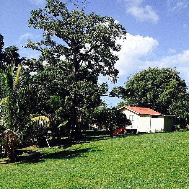 Hot Photograph - Tobago Is Looking Beautiful!!! by Patsy Ramsahai