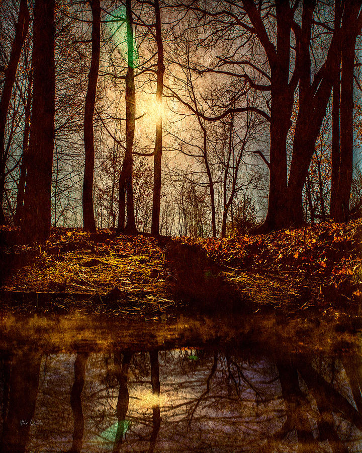 Tree Photograph - Today by Bob Orsillo