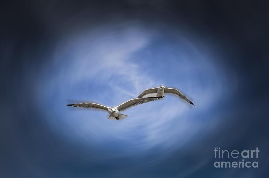 Birds Photograph - Together by Joe McCormack Jr