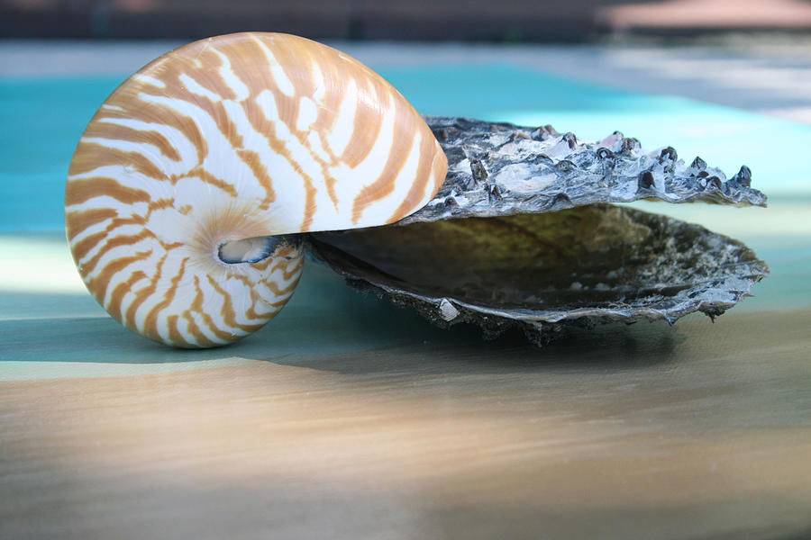 Shell Photograph - Together by Paulette Maffucci