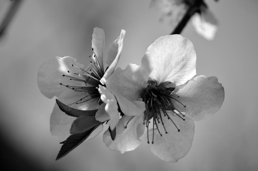 Flowers Photograph - Togetherness by David Earl Johnson