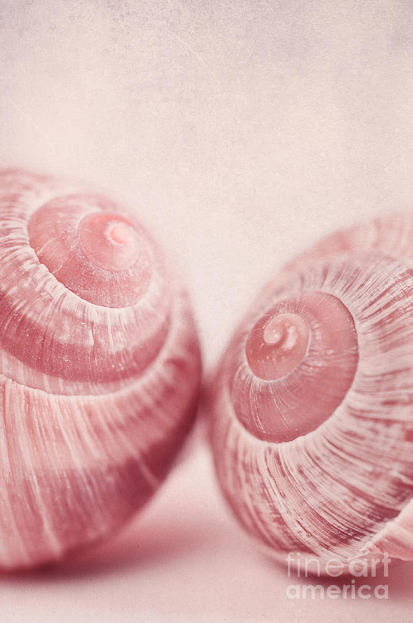 Snail Photograph - Togetherness by Priska Wettstein