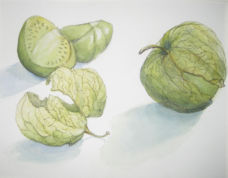 Pen And Ink Drawing Painting - Tomatillos by Maria Hunt