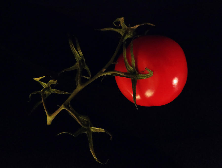 Tomato Photograph - Tomato With Stem by Patricia Januszkiewicz