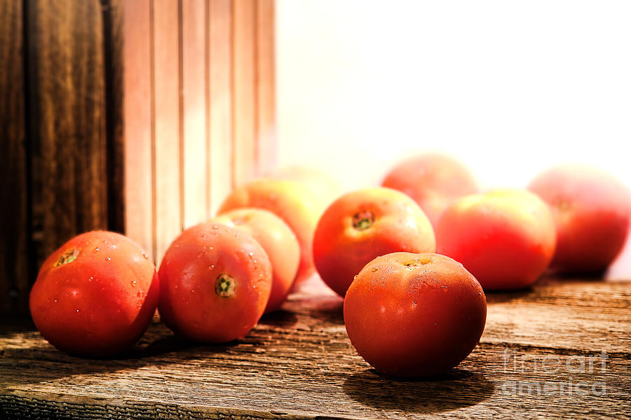 Tomatoes Photograph - Tomatoes In An Old Barn by Olivier Le Queinec