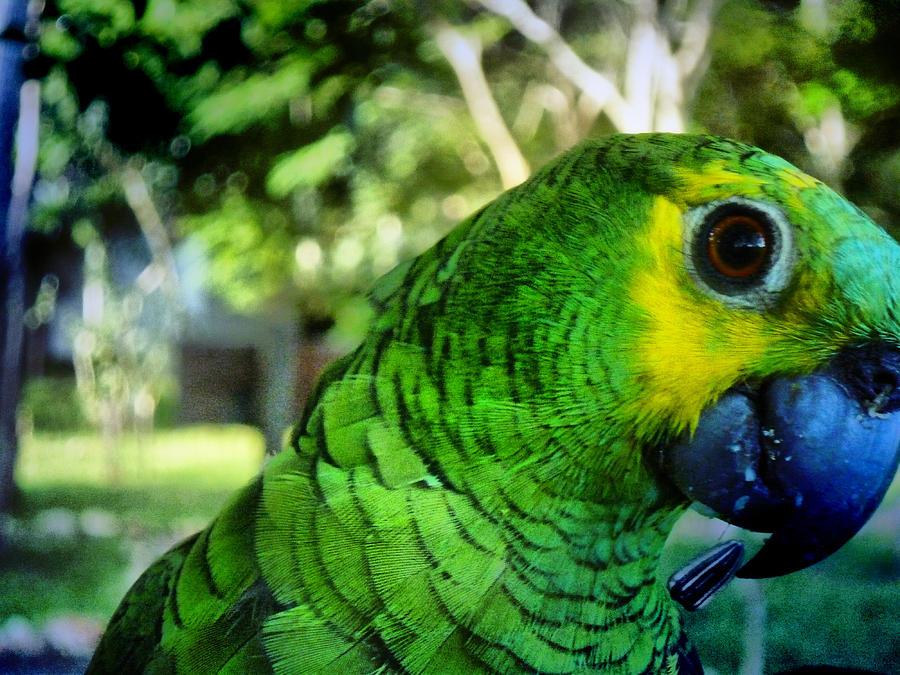 Parrot Photograph - Tony by Beto Machado