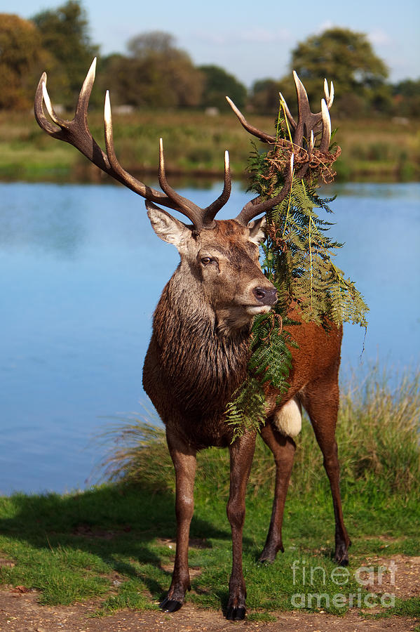 Rut Photograph - Too Close by Pete Reynolds