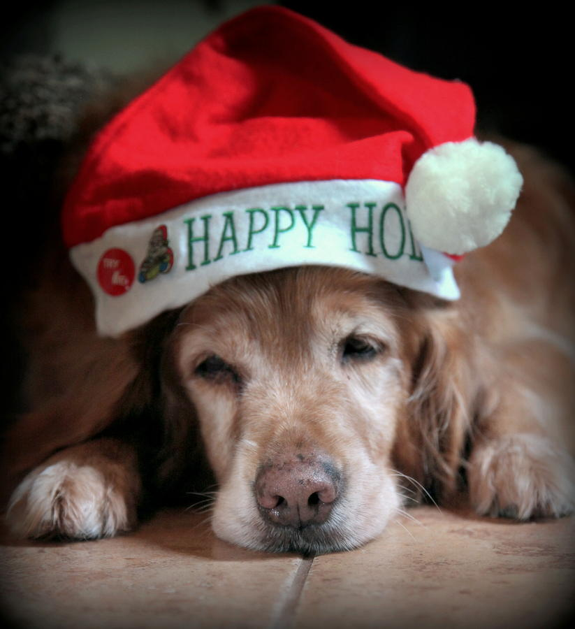 Dogs Photograph - Too Much Eggnog by Karen Wiles