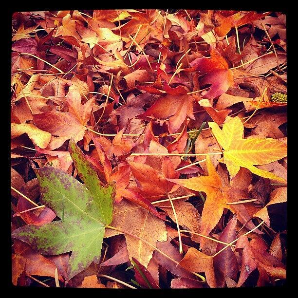 Autumn Photograph - Too Soon? by CML Brown