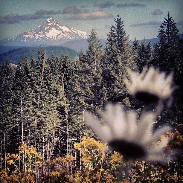 Beautiful Photograph - Took This Shot Of Mt Hood From A by Mike Warner