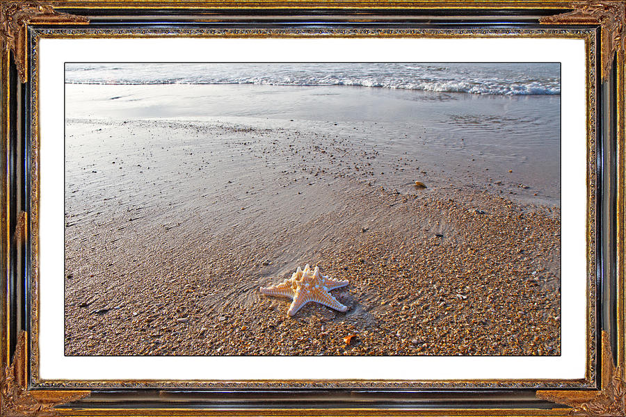 Topsail Mixed Media - Topsail Island The Only One by Betsy Knapp