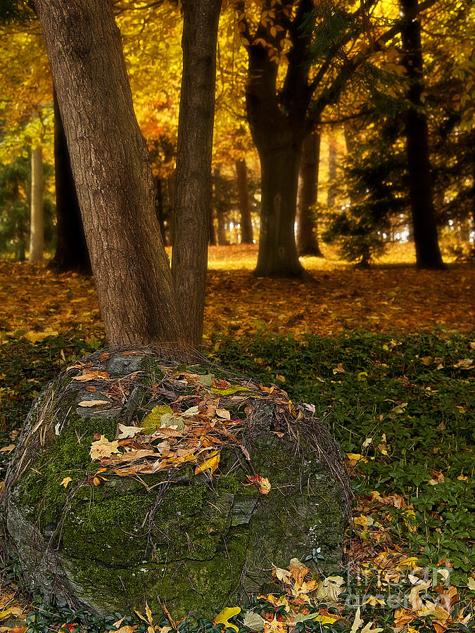 Fall Photograph - Torch Of Autumn by Lee Craig