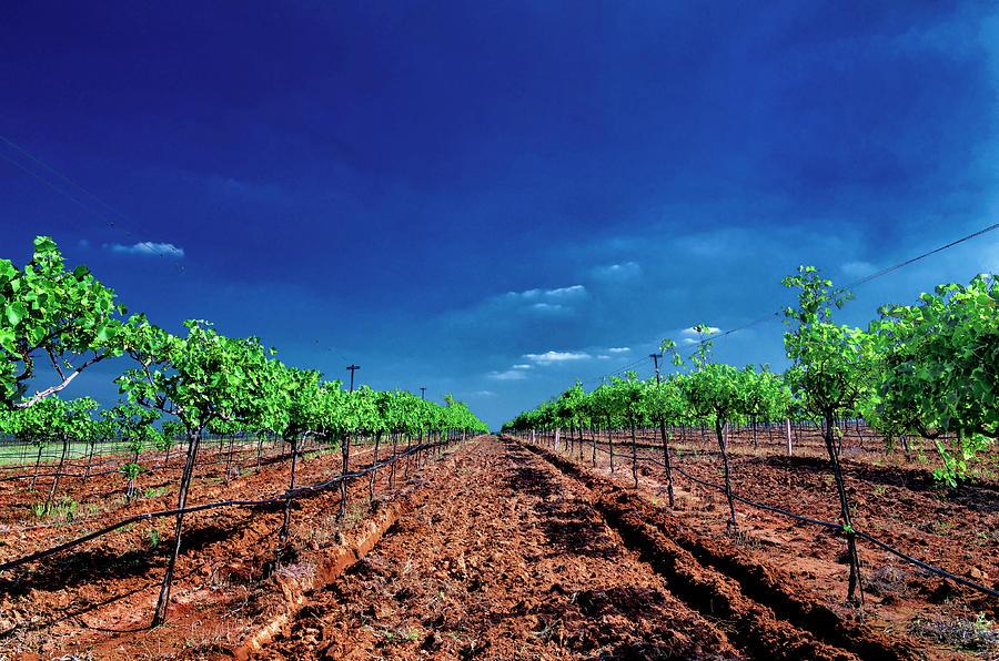 Torre Di Pietra Winery Photograph by Dean Fikar