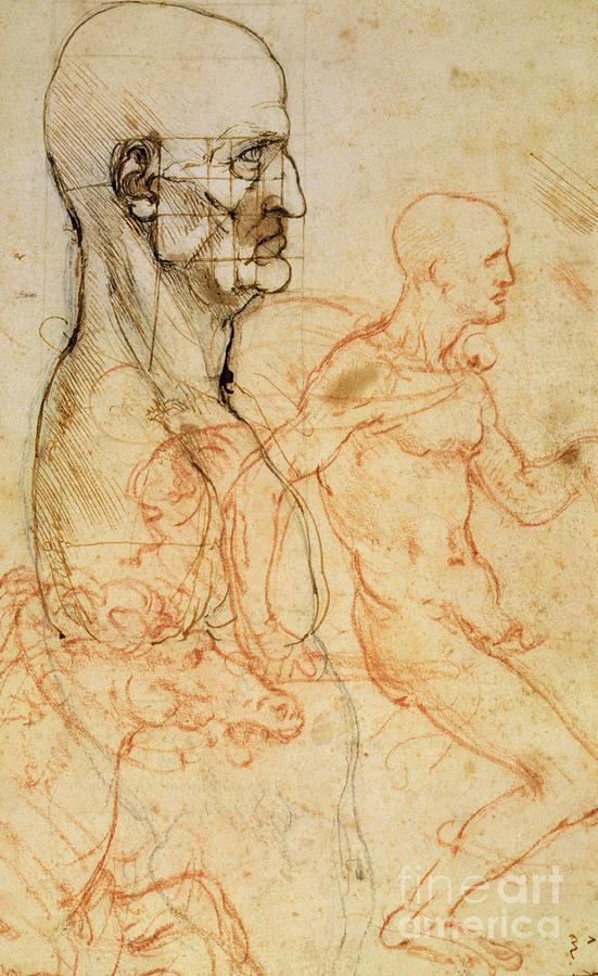 Torso Of A Man In Profile Drawing by Leonardo da Vinci