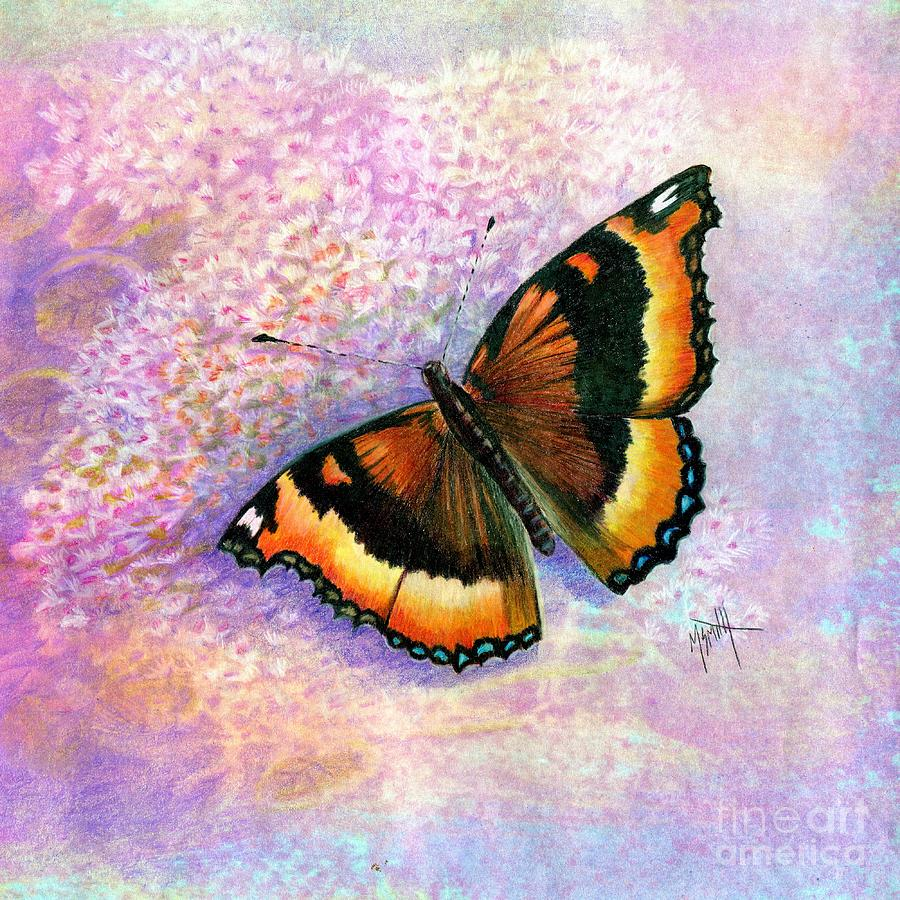 Butterfly Drawing - Tortoiseshell Butterfly by Marilyn Smith