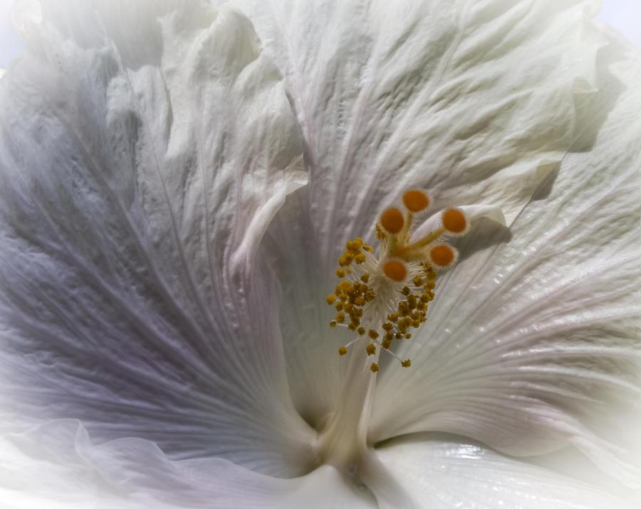 Photograph Digital Art - Touch Of Blue by Jill Balsam