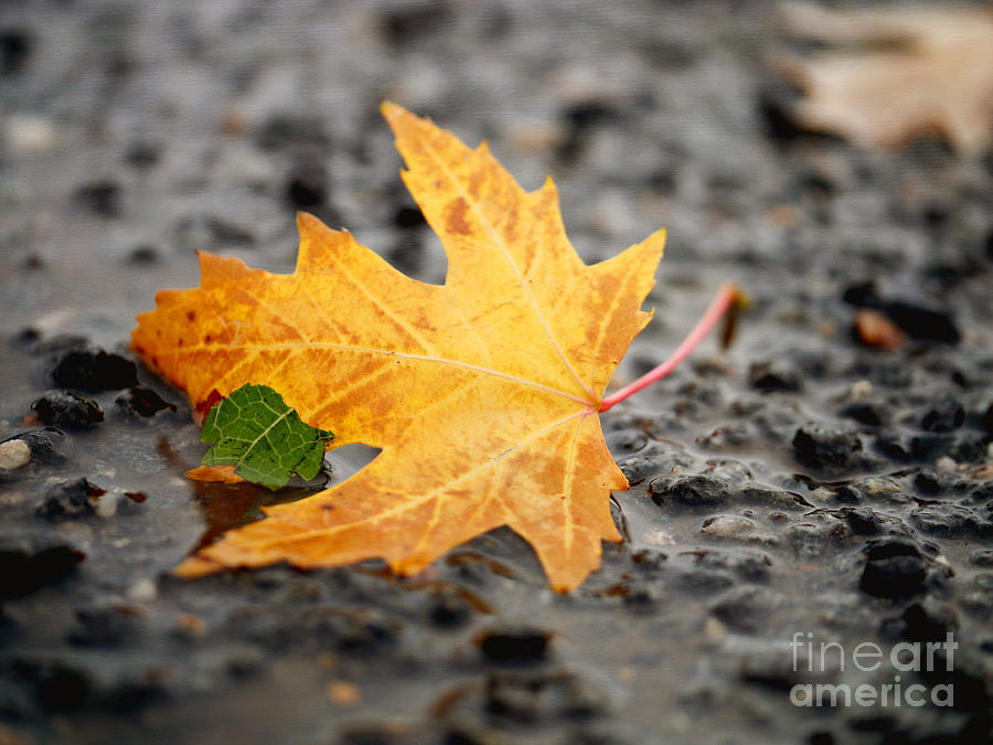 Yellow To Brown Colors Photograph - Touch Of Green by Irina Wardas
