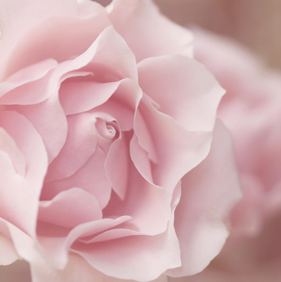 Pink Rose Photograph - Touch Of Love by Kim Hojnacki