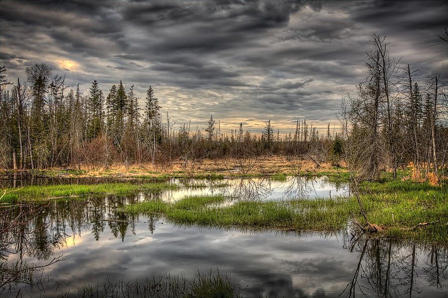 Forest Photograph - Touch Of Nature by Gary Smith