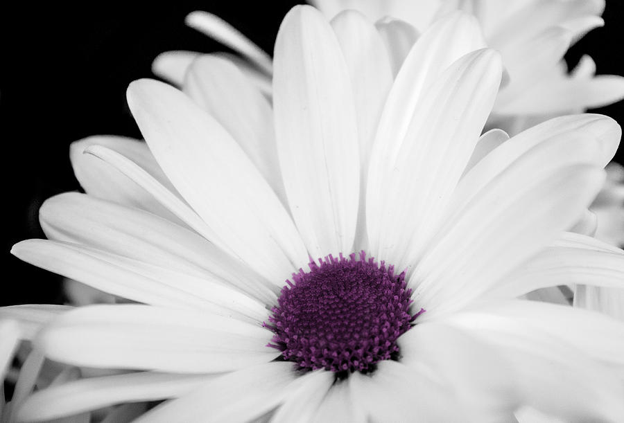 Flower Photograph - Touch Of Purple by Xenia Headley