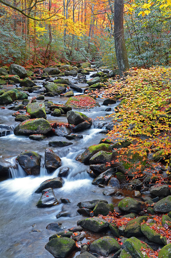 Jones Gap Photograph - Touched by Fall by Mary Anne Baker