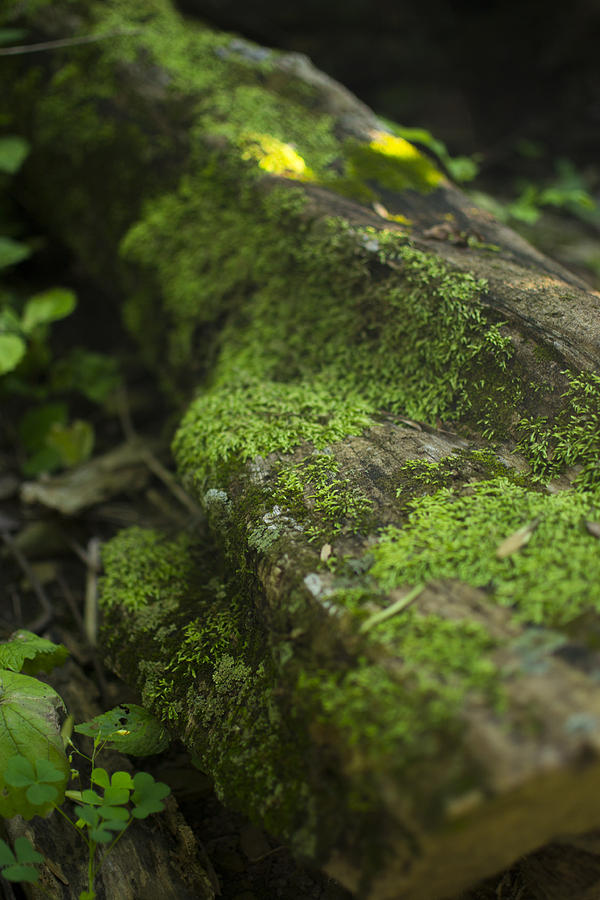 Tree Photograph - Touched By Nature by Michael Williams