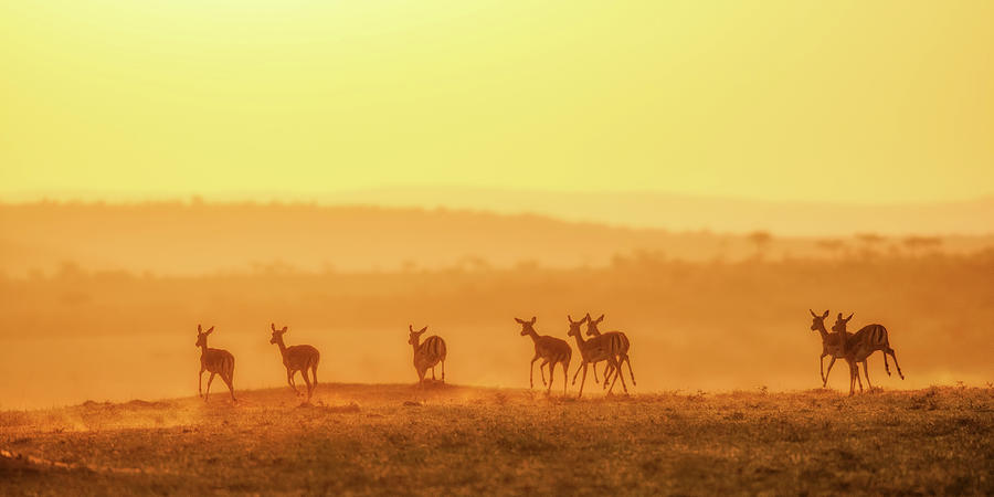 Antelope Photograph - Towards Sunset by John Fan