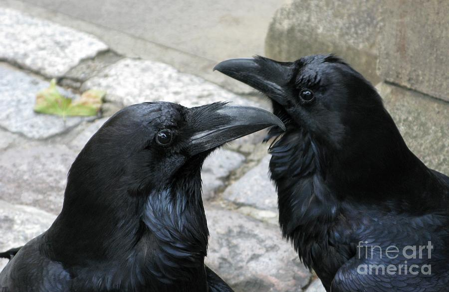 Raven Photograph - Tower Ravens by Ann Horn