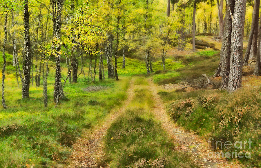 Track Photograph - Track Through The Autumn Woodland by Louise Heusinkveld