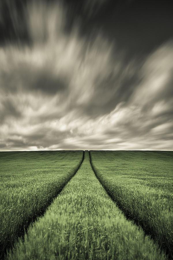 Field Tracks Photograph - Tracks by Dave Bowman
