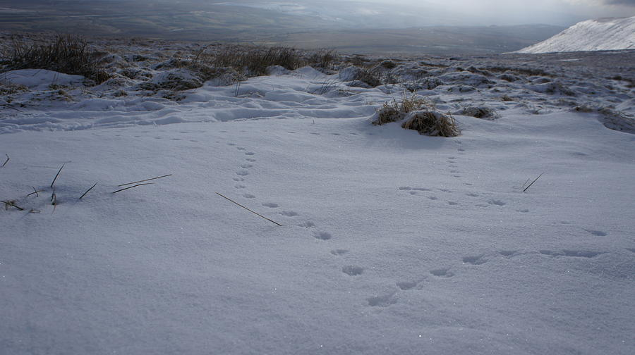 Snow Photograph - Tracks by Riley Handforth
