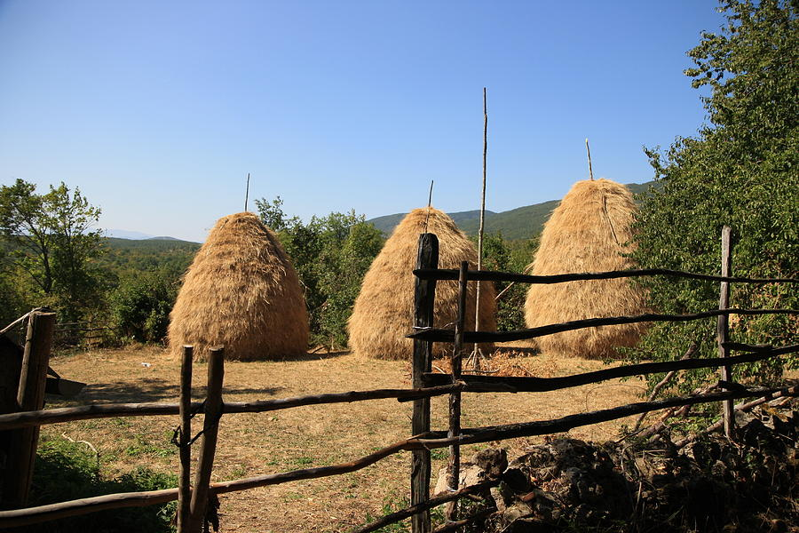 Bosnia And Herzegovina Photograph - Traditional Agriculture by Frederic Vigne