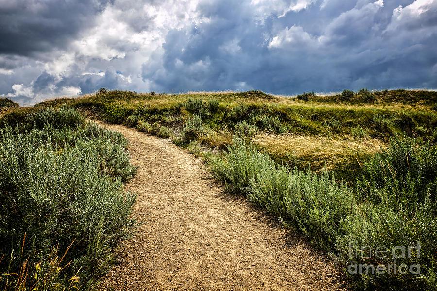 Badlands Photograph - Trail In Badlands In Alberta Canada by Elena Elisseeva
