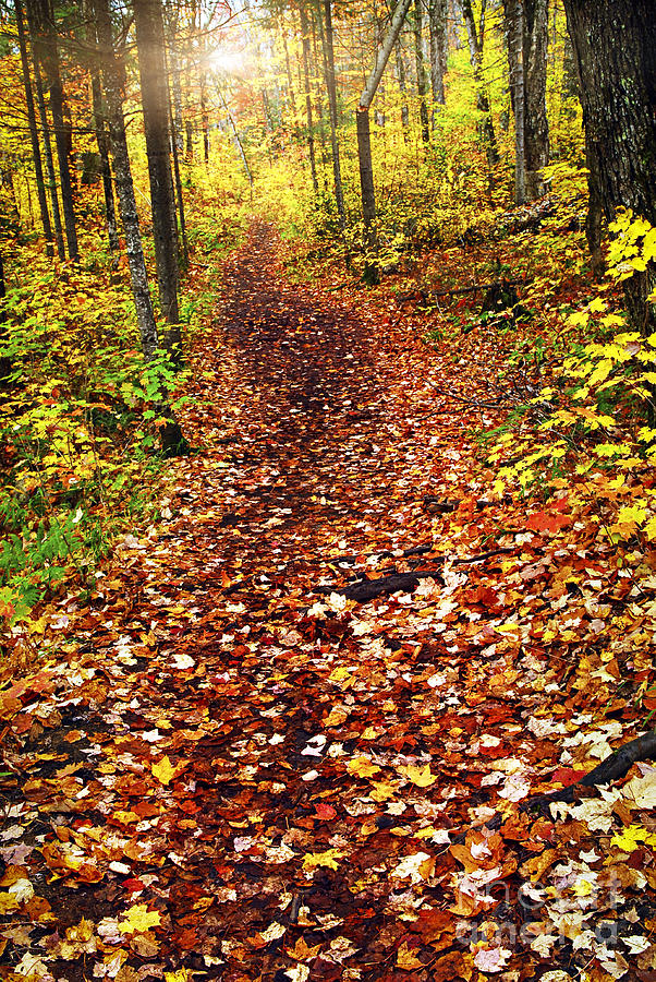 Autumn Photograph - Trail In Fall Forest by Elena Elisseeva