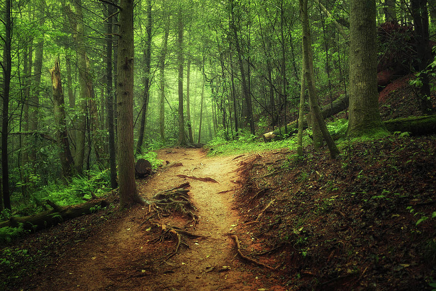 Trail Through The Forest Photograph by Marilyn Nieves