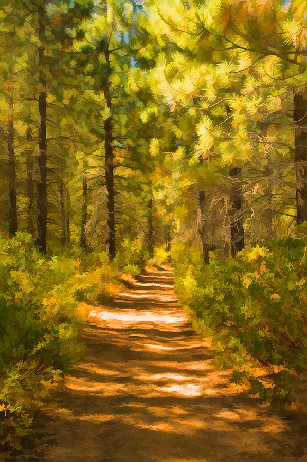 Trail Through The Woods Digital Art By Mick Burkey