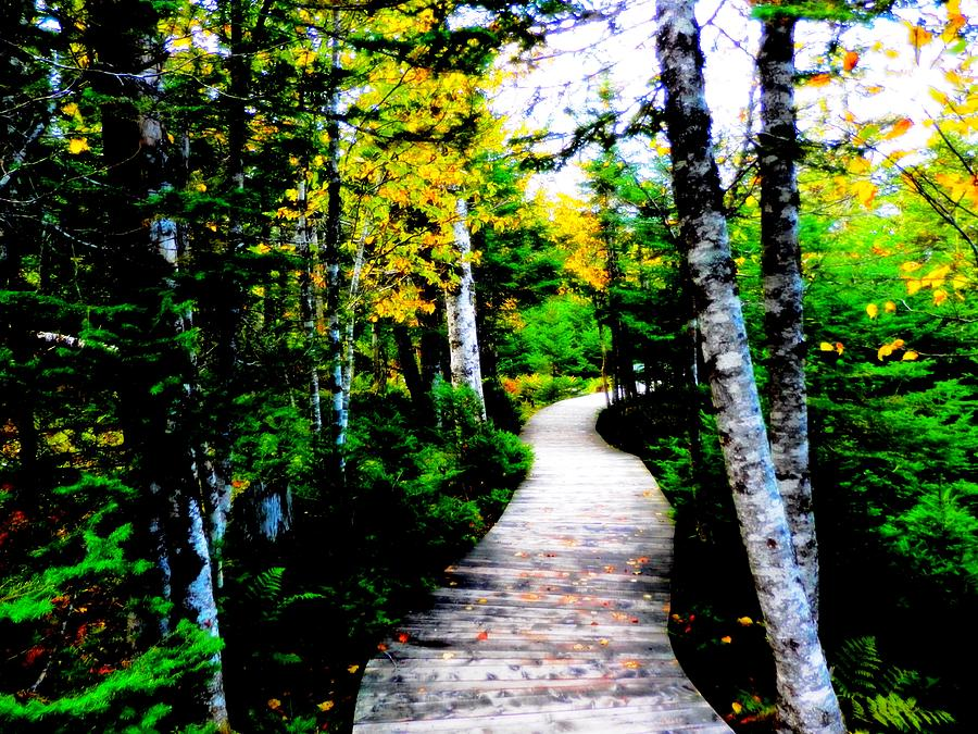 Trail Photograph - Trail To Autumn by Zinvolle Art