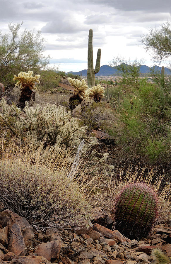 Desert Photograph - Trailside by Gordon Beck