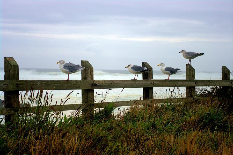 Gulls Photograph - Trained Gulls by John  Greaves
