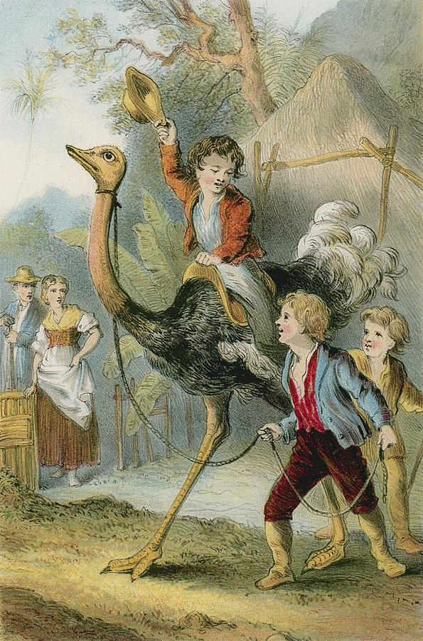 Swiss Family Robinson Photograph - Training The Ostrich by English School